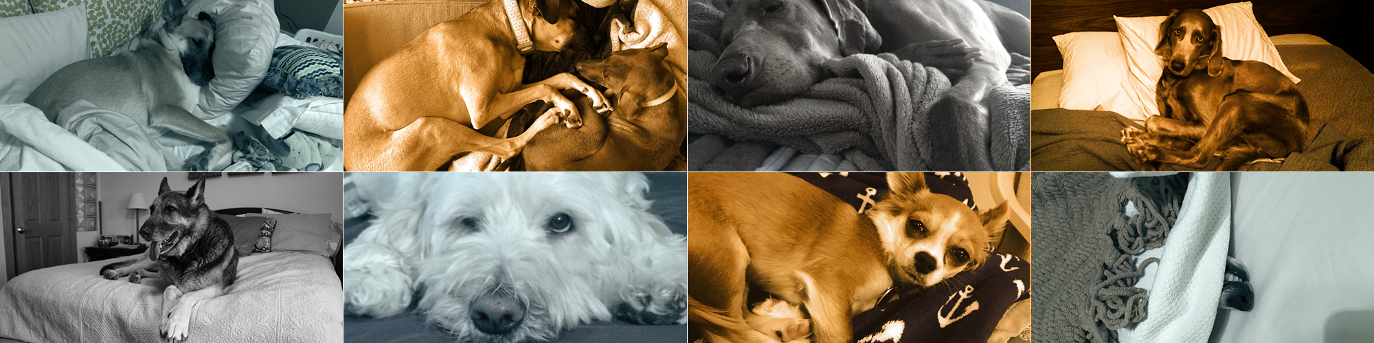 collage fo dogs