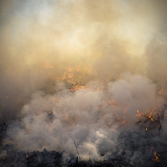 Photo of a controlled burn