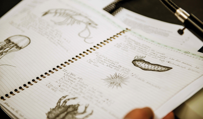 Drawings of marine organisms
