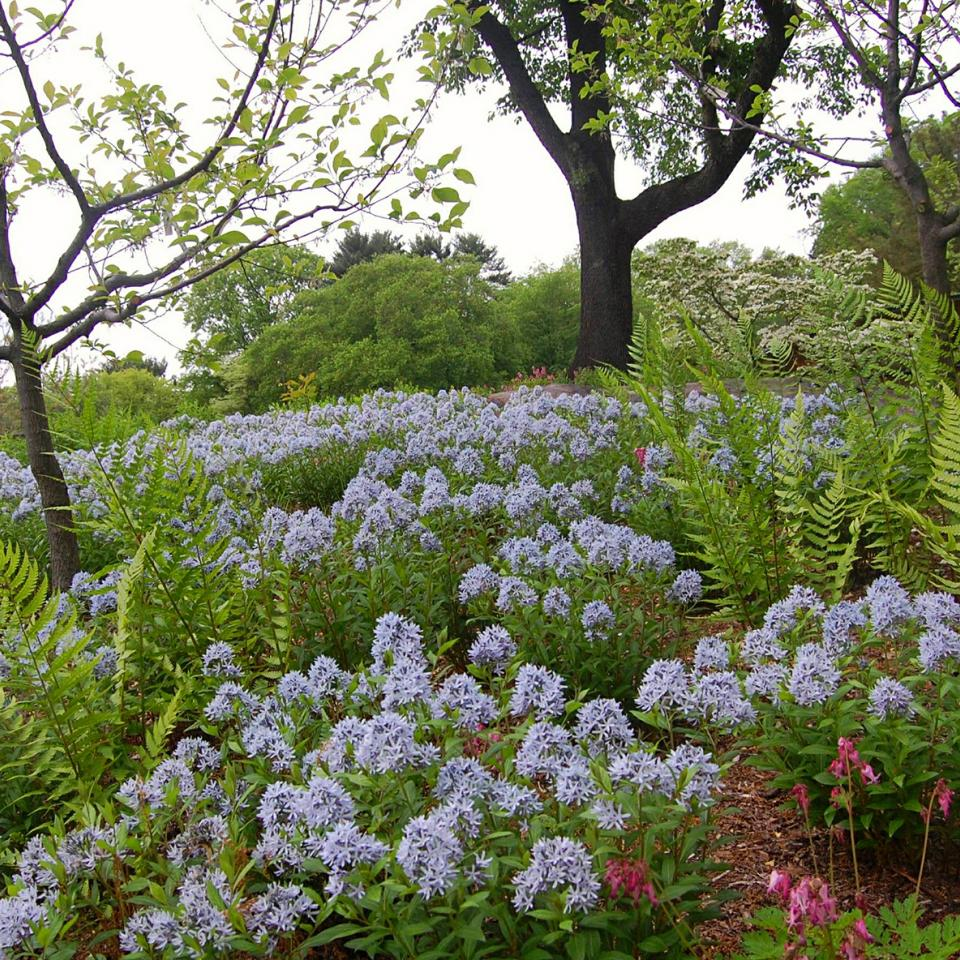Native Plant Garden at NY Botanic Garden